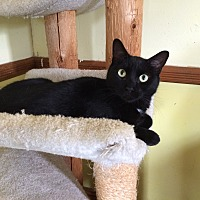 Adopt A Pet :: Jaguar - Middletown, NY