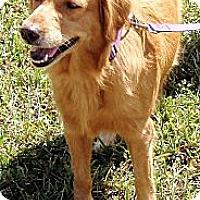 Adopt A Pet :: Lilly - Murdock, FL