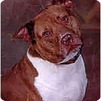 Adopt A Pet :: Sake (Sock-ee) - Hoffman Estates, IL