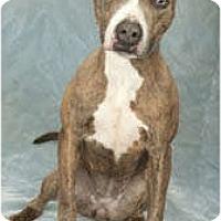 Adopt A Pet :: Nadia - Chicago, IL