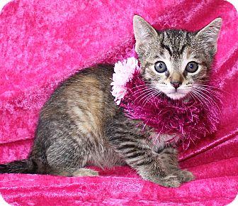 Domestic Shorthair Kitten for adoption in Jackson, Michigan - Hazel