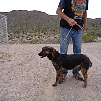 Adopt A Pet :: Jamocha - Golden Valley, AZ