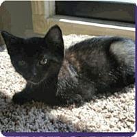 Adopt A Pet :: Fila - Colorado Springs, CO