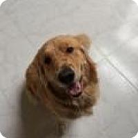 Adopt A Pet :: Leenda - Park Ridge, NJ