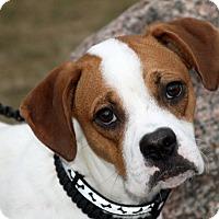 Adopt A Pet :: Rocky - Joliet, IL