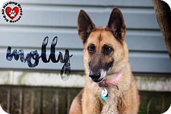 German Shepherd Dog Dog for adoption in Joliet, Illinois - Molly