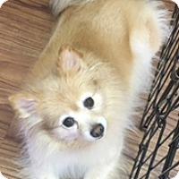 Adopt A Pet :: Sandy - Cranford, NJ