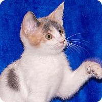 Adopt A Pet :: Melinda - Elmwood Park, NJ