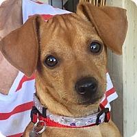 Adopt A Pet :: Sonny - Chandler, AZ