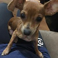 Adopt A Pet :: MIA - McKinney, TX