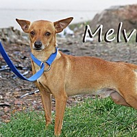 Adopt A Pet :: Melvin - Joliet, IL