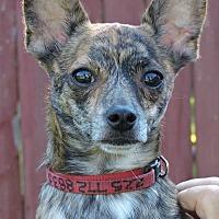 Adopt A Pet :: Rocky - Killian, LA
