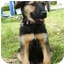 Photo 3 - Shepherd (Unknown Type) Mix Puppy for adoption in Detroit, Michigan - Vanna-Pending