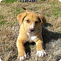 Adopt A Pet :: RADAR-JJ - Roundup, MT