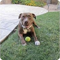 Adopt A Pet :: Maggie - Scottsdale, AZ