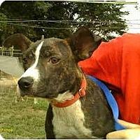 Adopt A Pet :: Trudy - Emory, TX
