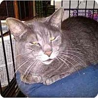 Adopt A Pet :: Duvet - Erie, PA