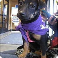 Adopt A Pet :: Chole - San Diego, CA