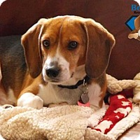 Adopt A Pet :: Simba - Yardley, PA