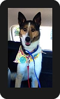 Collie Mix Dog for adoption in Riverside, California - Bailey
