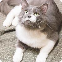 Adopt A Pet :: Mr Bo Jangles - Chicago, IL