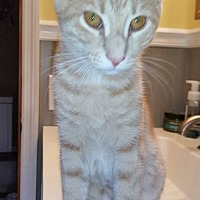 Adopt A Pet :: Leonardo - Brick, NJ