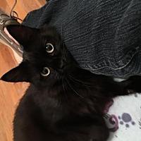 Adopt A Pet :: Barcissa - Grand Ledge, MI