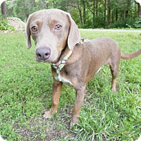 Adopt A Pet :: Dabney - Mocksville, NC
