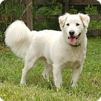 Adopt A Pet :: NELSON - Salem, NH