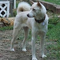 Adopt A Pet :: Joellen - Holly Springs, NC