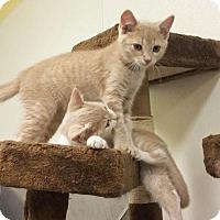 Adopt A Pet :: Princess Peach - Park Falls, WI