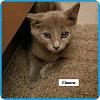 Adopt A Pet :: Fleece - Miami, FL
