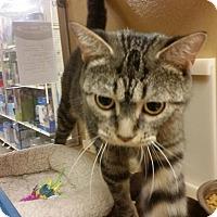 Adopt A Pet :: CHARLOTTE - Northfield, OH