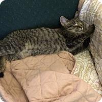 Adopt A Pet :: Strawpurry - Elyria, OH