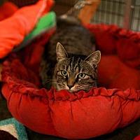 Adopt A Pet :: Mercy - Raleigh, NC