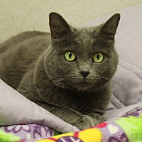 Adopt A Pet :: Kitty - Naperville, IL
