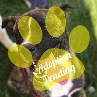 Adopt A Pet :: Randi (Randall) - DeSoto, IA