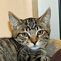 Adopt A Pet :: Grace - Walnut Creek, CA