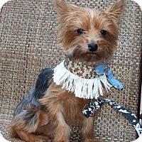Adopt A Pet :: MacKenzie - Tallahassee, FL
