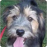 Adopt A Pet :: Smiley - Allentown, PA