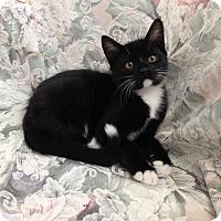 Adopt A Pet :: Weasley - Coral Springs, FL