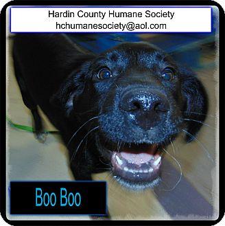 Australian Shepherd/Blue Heeler Mix Puppy for adoption in Kenton, Ohio - Boo Boo