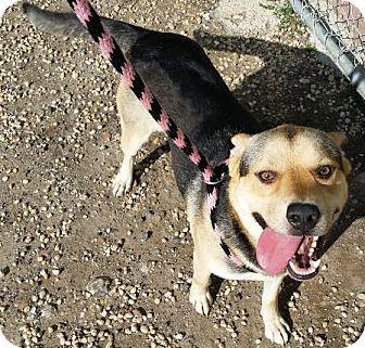Shepherd (Unknown Type) Mix Dog for adoption in Philadelphia, Pennsylvania - Jericho