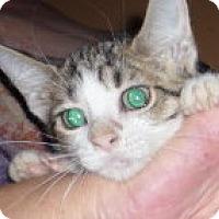 Adopt A Pet :: Booger - Dallas, TX