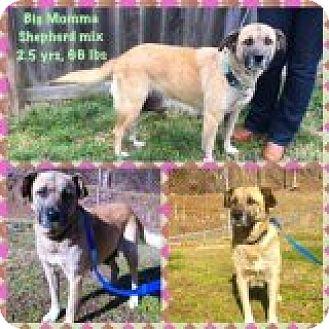 Shepherd (Unknown Type) Mix Dog for adoption in Breinigsville, Pennsylvania - Big Momma