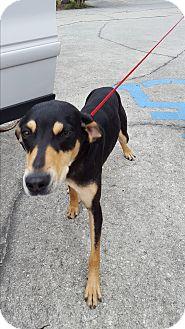 Hound (Unknown Type) Mix Dog for adoption in Umatilla, Florida - Adele