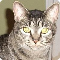 Adopt A Pet :: Sammee -Adoption Pending! - Colmar, PA