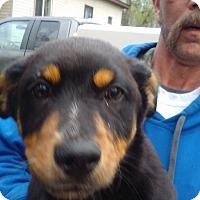 Adopt A Pet :: Cori - Kendall, NY