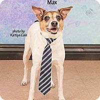 Rat Terrier Mix Dog for adoption in Waynesboro, Pennsylvania - Max