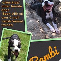 Adopt A Pet :: Bambi - St. Francisville, LA